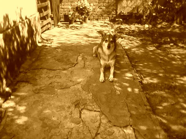 Lobo =)