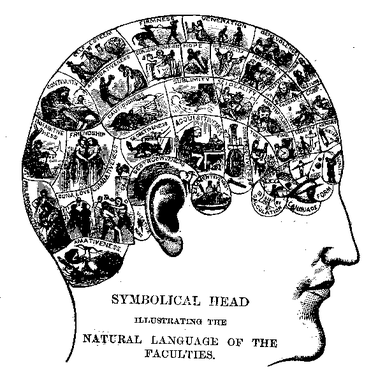 Phrenological chart